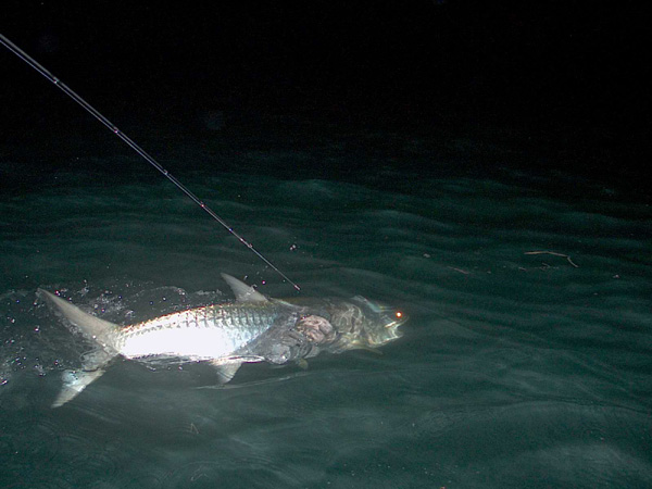 Florida Keys Tarpon on Fly April 2009