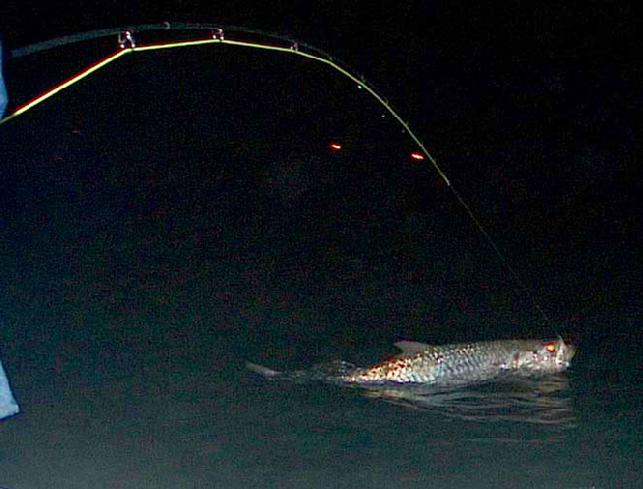 Welcome to jake jordan 39 s fishing adventures for Trout fishing at night